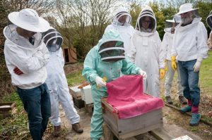 Opening the hives for the first time since the winter, Stanmer Park apiary, April 2015